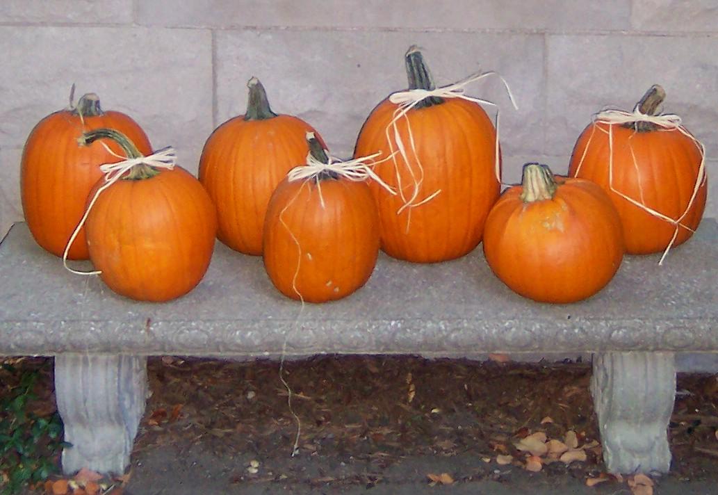 26 pumpkin bench