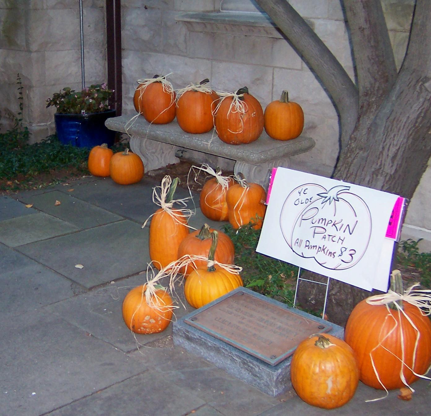 27 pumpkin patch
